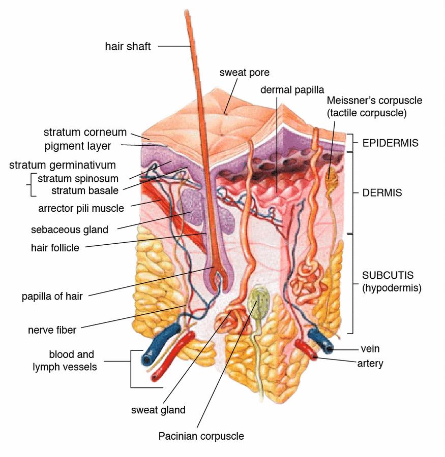 Khasiat Minyak Zaitun pada Tubuh Badan Kulit
